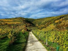 Austria, Vineyard, Road Trip, Castle, Country Roads, Mountains, Outdoor, Traveling, Places