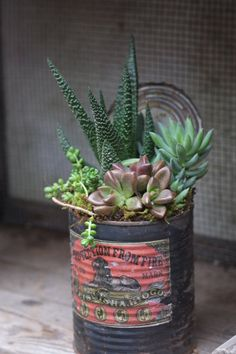 #succulents in a tin can