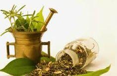 Resultado de imagem para homeopatia homeopaticos