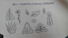 Bos > planten, struiken en bladeren (schetsen)