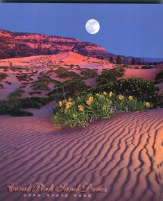 Pink Sand Dunes, Utah State Park Coral Pink Sand Dunes State Park, Utah- another Utah destination!Coral Pink Sand Dunes State Park, Utah- another Utah destination! Beautiful Moon, Beautiful World, Beautiful Places, Beautiful Pictures, Amazing Places, Wyoming, Bryce Canyon, Grand Canyon, Puerto Rico