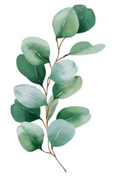 vert leafy brown stem Green Watercolor, Watercolor Leaves, Watercolor Paintings, Green Leaves, Plant Leaves, Traditional Roses, Red And White Flowers, Elegant Centerpieces, Fine Paper