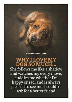 Dogs - I love all four of our rescues very much as well as their feline brothers and sisters I Love Dogs, Puppy Love, Cute Dogs, Diy Pet, Animals And Pets, Cute Animals, Pet Sitter, Dog Quotes Love, Quotes On Dogs