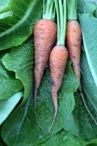 Seven Spring Vegetables to Eat Now and Why (Photo copyright Isabel Gomes)