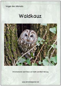 Free: Vogel des Monats: der Waldkauz