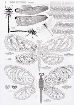 24 libellule