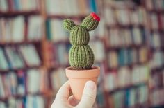 Flowering Curvy Knitted Cactus  Flowering Cactus Knit