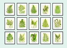 Vintage Fern Illustrations on Yellow Green Background by LeafDecor
