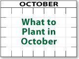 What to Plant in October - and every other month of the year!!