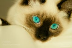 Erma's Blue Eyes by Will Moneymaker