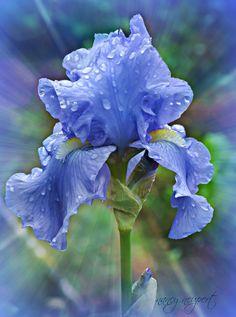 Iris. Planet: Venus. Element: Water. Deities: Iris (goddess of the rainbow, messenger of the gods) and Juno (Roman goddess of marriage and childbirth). The three points represent wisdom, faith, and valor.