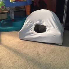 My Maximus waited Diy Cat Tent, Cat Empire, Car Tent, Cat House Diy, What Cat, Cat Room, Cat Sleeping, Cat Furniture, Cool Cats