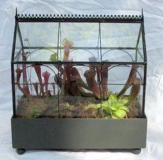 terrariums with carniverous plants | Plants That Eat Bugs: Growing Carnivorous Plants