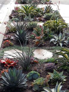 I like the idea of pavers in between bunches of plants, but they have to be spaced much closer together--so do the plants. Or else you risk dogs and stray cats using it as a toilet (no one picks up after their pets here).