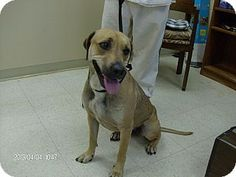 Rome, GA.  URGENT.  13D-0771 (4/07) is a Med. [26-60 lbs], adult, female, Hound (Unknown Type) Mix.  ID#:  13D-0799.  Available for adoption on 4/07 & for rescue on 04/08.  Picked up as a stray.  Floyd County Animal Control Department:--> Contact Jason Broome at (706) 236-4537 or email broomej@floydcountyga.org
