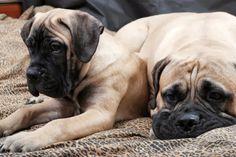 Eutanazja, czyli uśmiercenie psa