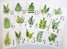 Fern Table Cards Fern Table Numbers Woodland Table Tents