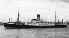 Lycaon 1954