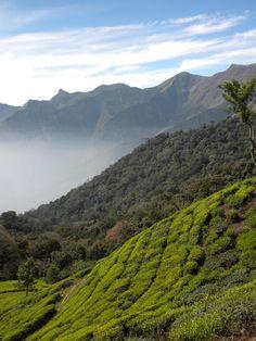 Munnar, #Kerala Ooty, Munnar, Visit India, Honeymoon Packages, Kerala India, Hill Station, Coimbatore, Beautiful Sites, World Peace