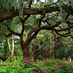 29 lugares incríveis ao redor do mundo que se transformam em jardins celestiais 06