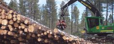 Among all the Washington timber companies CFR specializing in timberland management and investment as well as other forestry services in Western Washington. Logs For Sale, Timber Companies, Forest Resources, Mason County, Environmental Law, National Forest, Washington State, The Locals, Climate Change