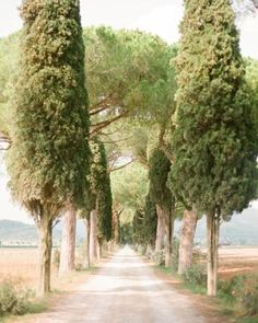 I want a long tree lined driveway