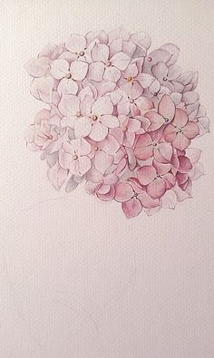 vintage inspiration: Hydrangea watercolor