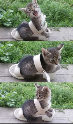 The Fashionista | The 100 Most Important Kitten Pictures Of All Time