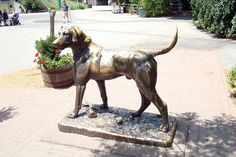 The famous dog statue in the Roger Williams Park Zoo in Providence, RI. Generations of children have had their pictures taken seated on this dog.