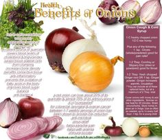 Recipe for Onion Cough & Cold Syrup / Natural Remedies / Health Benefits of Onions Health And Nutrition, Health And Wellness, Nutrition Tips, Onion Benefits Health, Benefits Of Red Onion, Salud Natural, Food Facts, Herbalife, Natural Healing