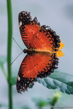 ButterflySharing!