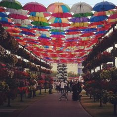 Just couldn't get enough of this miracle! Miracle Garden. Dubai