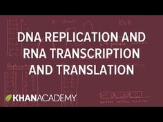 DNA replication and RNA transcription and translation | Khan Academy - YouTube