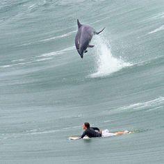 Dolphinsssss!