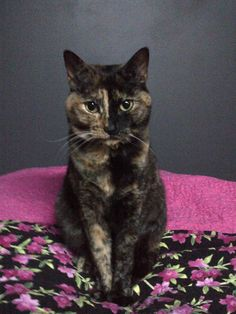 Mother of four Angel is our #catoftheweek!