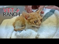 Watch the whole thing.  Vet Ranch! The Saddest Kitten You've Ever Seen - YouTube