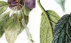 Chelsea School of Botanical Art - Focus on Leafy Character Short Courses, Botanical Art, Plant Leaves, Chelsea, Watercolor, School, Floral, Artist, Plants
