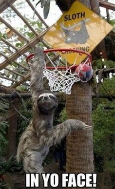 The Best of Sloth Memes (16 Pics) | Vitamin-Ha