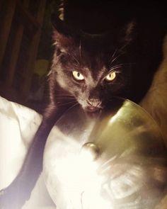 Wenn wir Menschen uns ein bisschen mehr wie Katzen aufführten, wäre die Welt ein Stückchen besser. Und unterhaltsamer.
