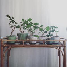 """250 gilla-markeringar, 9 kommentarer - Floras Retro - Linda Kolbäck (@florasretro) på Instagram: """"Blombord i rotting ! Krukor privata, men det finns andra fina krukor i butiken. Blombord SÅLT.…"""""""