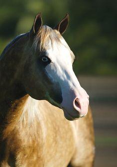 Big Chex to Cash, Quarter Horse stallion---ddddddrool