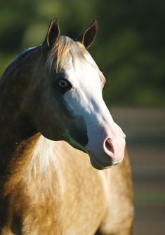 Big Chex to Cash, Quarter Horse stallion