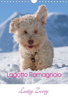 12 Bilder für ein Schmunzeln jeden Tag, sollte jeder an der Wand haben....nicht nur für graue Tage. #lagottoromagnolo #lustigezwerge #kalender #funnylittledwarfs #calendar #wuffclickpic Lagotto Romagnolo, Scenery, Calendar, German, Teddy Bear, Dogs, Nature, Animals, Funny Gnomes