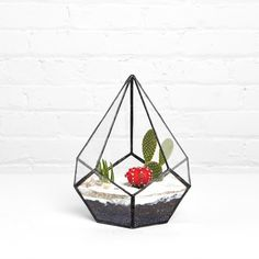 Fancy - Mandela Terrarium