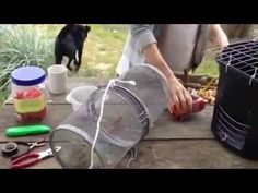 Make a crab trap from materials you have around the house. Crab Trap, Lobster Trap, Crab And Lobster, Fishing Tips, Fly Fishing, Hunting Gear, Crabs, Saltwater Fishing, Building Plans