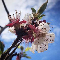 #flowfleurs2016 #fleurblanche #cocolico-creations #flowers
