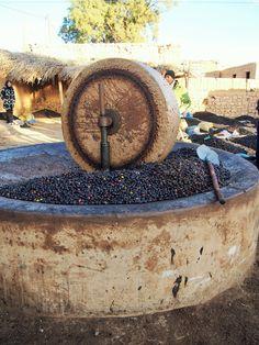 Olive press ~ Meski, Morocco Olives, Mint Plants, Farm Photography, Vintage Italy, Olive Gardens, Scotch Whiskey, In Vino Veritas, Fig Tree, My Secret Garden