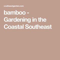 Plumbago - Gardening in the Coastal Southeast Herbaceous Perennials, Flowers Perennials, Bamboo Garden, Garden Plants, Plant Nursery, Coastal, Gardening, Community, Vivarium