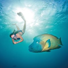 It's chilly outside so we're dreaming about snorkelling in the warm waters of the Great Barrier Reef!  #Australia #GBR #GreatBarrierReef #swimming #fish #snorkel #snorkelling #ig_australia #instagood #instatravel #traveller #blue #sea #ocean #reef #grouper by dtw_holidays http://ift.tt/1UokkV2