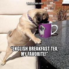 Pug tea connoisseur lol.